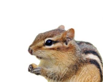 Digital CHIPMUNK PRINT  -Instant Download Digital Printable-  Modern Minimalist Wild Life - Ground Squirrel Art - Minimalist Nursery