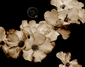 Roses Photography, Rose Print, Digital Download, Nature Print, Floral Photography, Flower Print, Flower Art, Macro Wall Art, Nature Wall Art