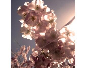 Spring Promise - 5x7 photo