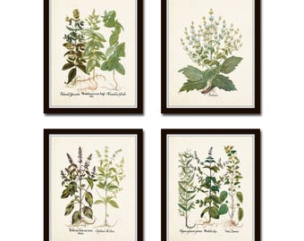 Antique Herbs Print Set No. 29, Herb Prints, Botanical Prints, Botanical Art, Botanical Print Set, Kitchen Art, Giclee, Art Prints, Herbs