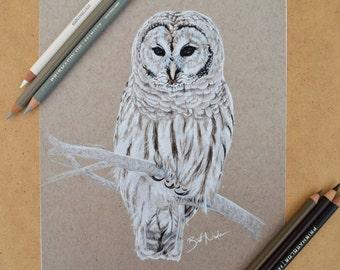 Winter Owl PRINT