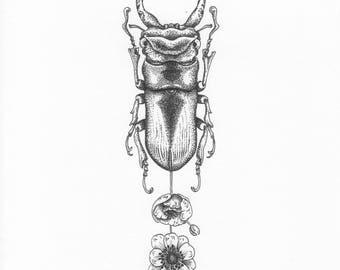 Beetle + flowers