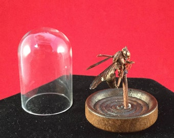 SALE Preserved Unidentified Wasp Glass Dome Display entomology insect wasp bee specimen