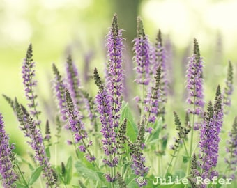 Flower Photography lavender purple nature photo