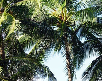 Palms, Hawaii