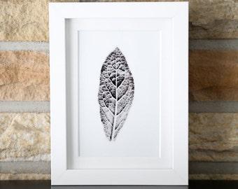Lambs ear leaf black and white print photograph