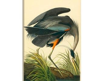 """Great Blue Heron by John James Audubon Canvas Art Print (1467) 26""""x18"""""""