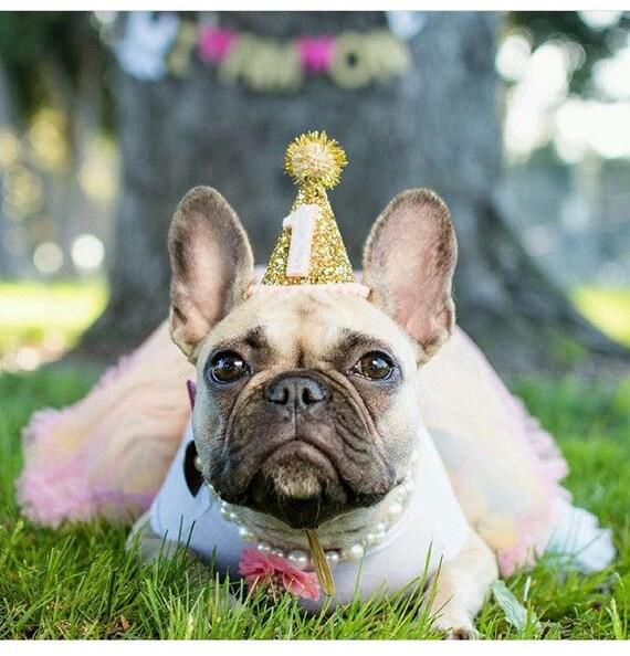 Dog Costume || Dog Clothes || Dog Birthday || Dog Party Hat