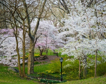 Central Park Art, New York Photograph Spring Photography Springtime Spring Flowers Photo nyc Cherry Trees nyc62