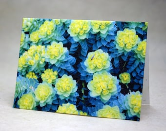 Seed Paper Euphorbia Detail Print Recycled Cotton Blank Notecard Set - Northwest Photography