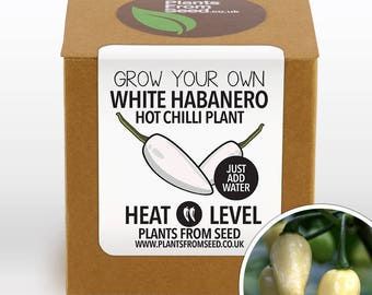 SALE NOW ON!!! - Grow Your Own White Habanero Chilli Plant Kit