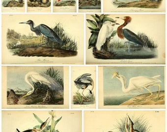 Audubon's Birds of America Complete 7 volumes 500 color plates High Resolution Instant digital download
