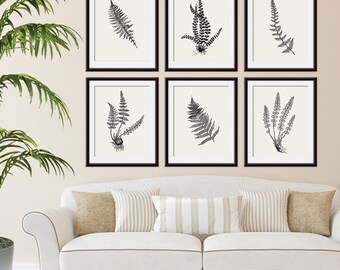 Ferns Garden Botanical Prints (Series J) Set of 6 - Art Prints (Featured in Black on Soft China) AS featured in BHG