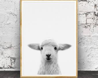 Lamb Print Wall Art, Lamb Print, Nursery Lamb, Nursery Animals, Nursery Animal Print, Cute Baby Lamb, Lamb Wall Art, Nursery Wall Art