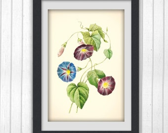 Digital Botancial Print, Redoute blue flower botanical illustration, wall art from a vintage bookplate, 8x11 wall art digital download 169