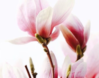 Floral Canvas - Fine Art Print - Floral Print - Magnolia Tree - Spring Decor - Canvas Print - Floral Wall Decor - Floral Photography - Pink