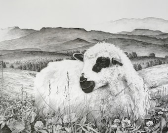 Limited Edition Fine Print of an original drawing of a lamb