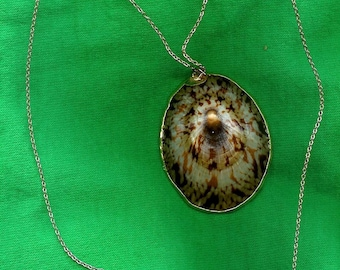 1960's Sea Shell Neckace w/ 12 Ct. Gold Filled Chain-As New