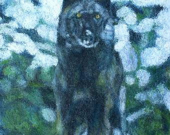 Black wolf art print 12x16 signed and dated Bill Pruitt