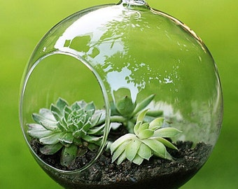 Mini terrarium glass ball 8 cm