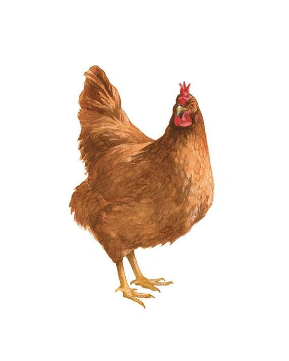 Henne-Druck Rhode Island Red Huhn Bauernhof Tier