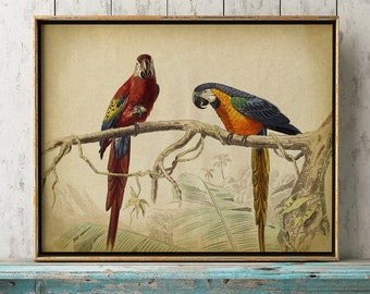 Parrot print, parrot poster, macaw print, macaw wall art, macaw wall decor, exotic bird print, parrot illustration,