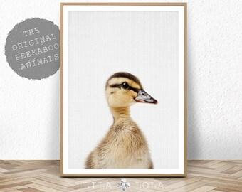 Nursery Art, Duckling Print, Baby Animal Wall Art, Duckling Photo, Nursery Decor, Nursery Printable, Printable Baby Duckling, Animal Art