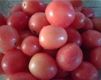 Sida pink tomato  300 seeds 100 seeds Heirloom Native Thai