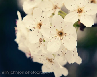 flower photography, white home decor, nature wall art, fine art photography, blossoms, floral, nature photograph, Bradford Pear