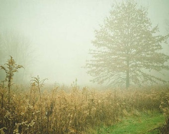 dreamy photography /ethereal photography / mint green aqua green / fog / landscape / cottage art / nature photography . Autumn Day 17