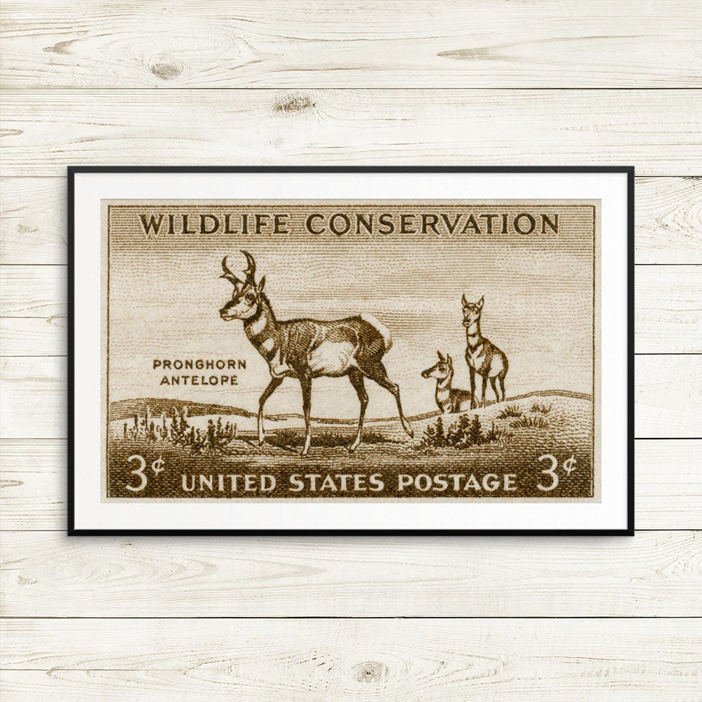 Antelope Antlers Antelope Head National Parks
