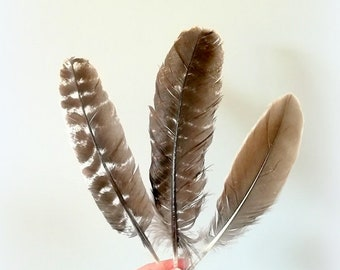 Large 3 X real dark brown feathers (Lot 1) Turkey feathers
