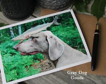 Dog Greeting Card, Dog Photography, Weimaraner Card, Dog Fish