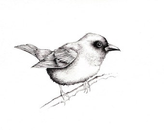 "Tanager Bird Print: Digital print of an original b/w drawing available 5x7"" or 8x10"""