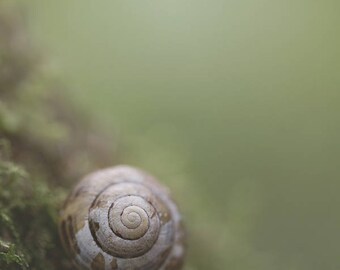 Photography print: snail shell on moss, tiny shell, nature photography, macro, fine art print