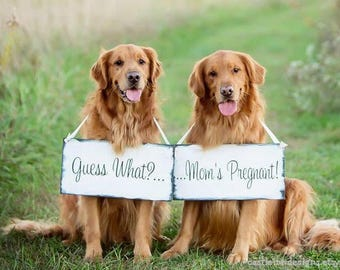 Pregnancy Announcement   Expecting Signs   Pregancy Reveal photo props   big sister brother   dog sign   2 pc