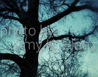 "8"" x 10"" Fine Art Dreamy Night Tree Photographic Print - Metallic Finish"