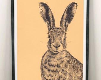 Dorset Hare A4 Print | British Wildlife Illustration | Illustrated Art Print