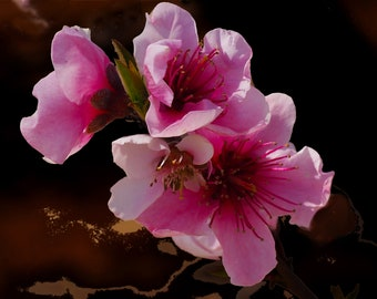 Spring Blossom #2 fine art print - contemporary art - photography -  wall art - flowers - spring blossoms - pink blossoms