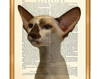 Cat Lover Gift, Cats Breeds Prints, Oriental Shorthair Cat Dictionary Art Print, Cat Breed Artwork Poster Page Cat Poster Book White Decor