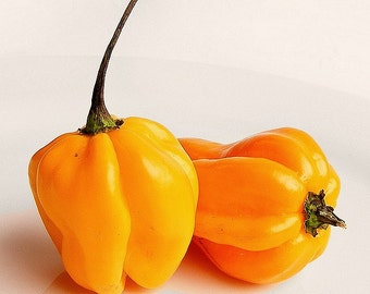 Trinidad Perfume, sweet chili pepper, fruity flavor, no heat, 30 seeds, Habanero fragrance, productive plants, makes sweet salsa