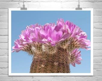 Cactus Flower Art, Southwest Wall Art, Cactus Picture, Magenta Flower Art, Desert Cactus Photo, Desert Flowers, Tucson Art, Arizona Gift