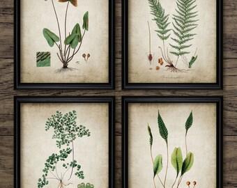 Green Plant Print Set of 4 - Vintage Plant Botanical Art Decor - Digital Art - Printable Art - Set Of Four Prints #176 - INSTANT DOWNLOAD