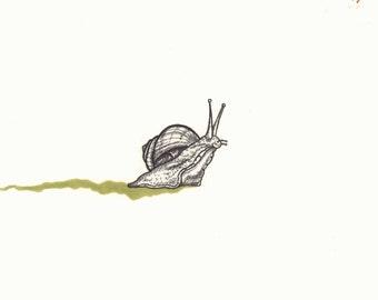 Original Bug Scientific Illustrations - small