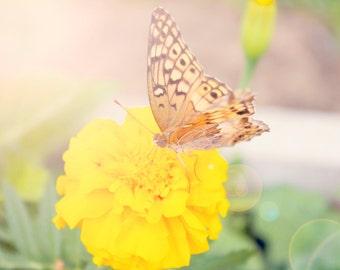 Sunflared Butterfly - 8x10 photograph - fine art print - nature - nursery art - yellow flower - flora bella