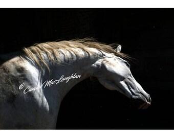 Bratach / Banner / Etendard - Equine Fine Art Horse Photography - Cheval Etalon  Photographie d'Art