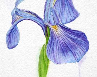 "Purple Iris 8"" x 10"" Original Watercolor Illustration"