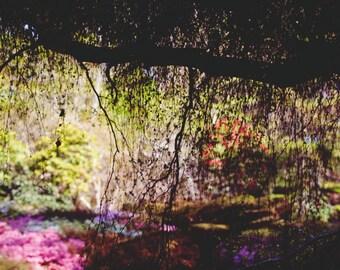 Garden Shadows: A6 Photography Art Print (Nature, garden photography)