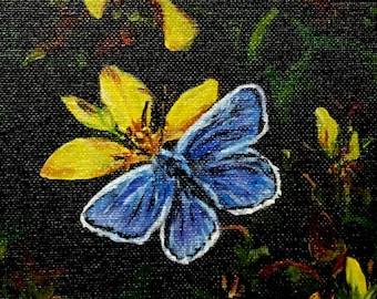 """Fine Art 5 X 7 Print of my Original Acrylic Painting """"Common Blue Butterfly"""""""