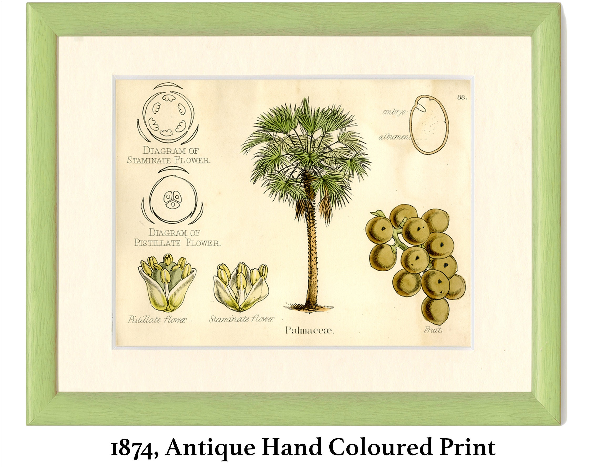 Palm tree antique botanical print 1874 plate 88 natural zoom ccuart Choice Image